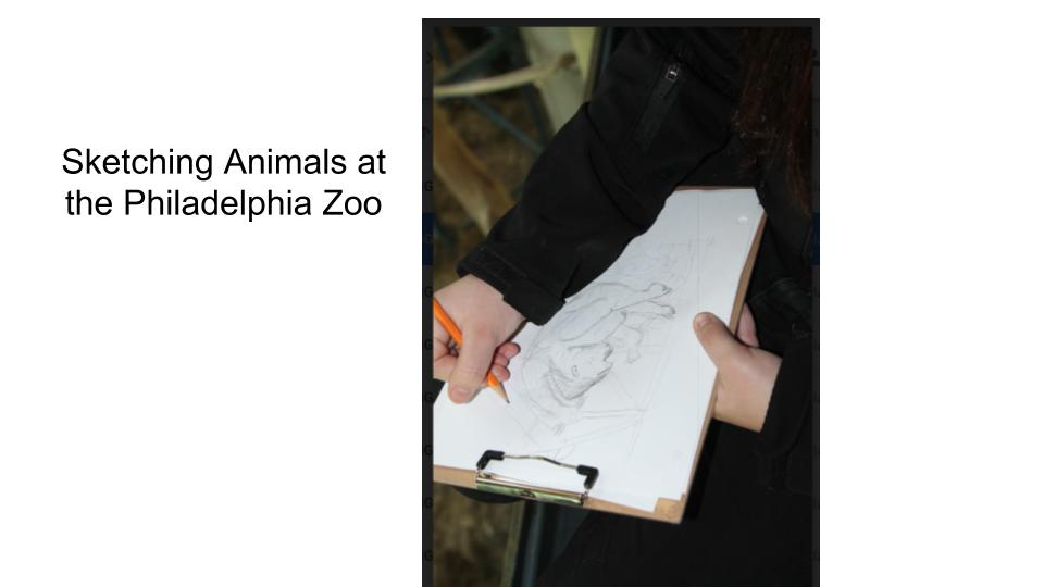 Sketching at zoo